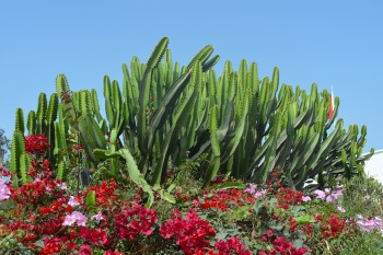 Cacti museo larco